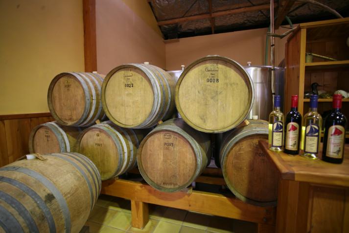 """En une vingtaine d'années, la Nouvelle-Zélande est devenue l'un des producteurs les plus appréciés du """"Nouveau Monde"""", pour la qualité de ses vins."""