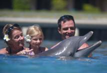 Au Moorea Dolphin Center, le public, accompagné d'un soigneurs, peut aller au contact des dauphins.  Photo : Moorea Dolphin center