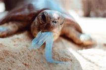Une île du Pacifique a la plus forte densité de débris plastiques