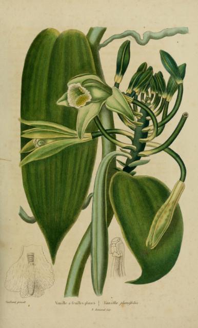 La vanille, au XIXe siècle, était un produit de luxe extrêmement recherché et les territoires tropicaux sous le contrôle de la France bénéficièrent du développement de cette culture.