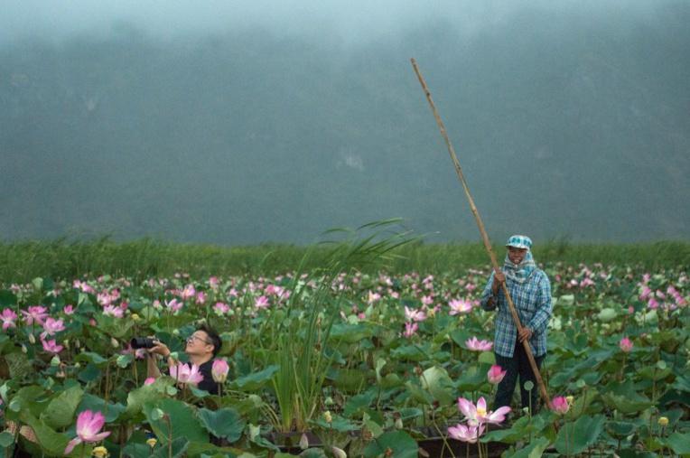 En Thaïlande, retour miraculeux des lotus sacrés