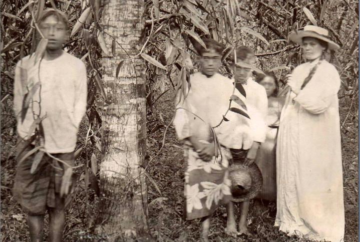 Dans une plantation de vanille, en 1903.