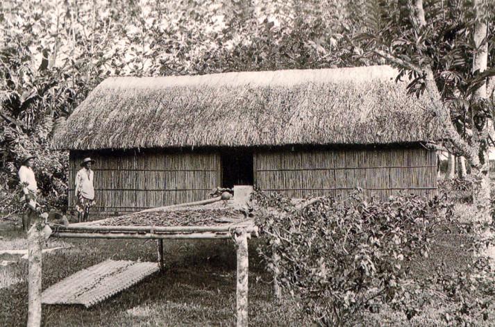 Séchage de la vanille, devant un fare aux murs de bambous et une toiture en pandanus, vers 1900.