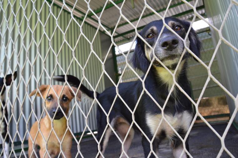 Animaux abandonnés recherchent familles d'accueil