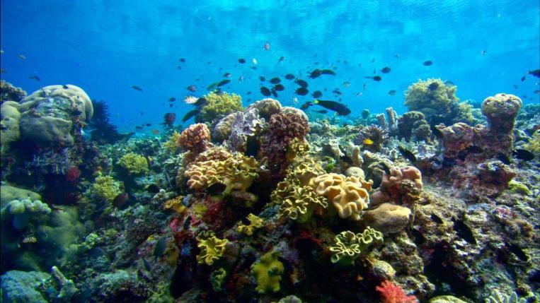 Nos magnifiques récifs, entre beauté incroyable et fragilité inquiétante.