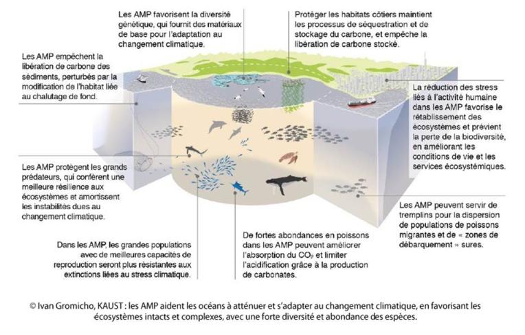Les AMP favorisent aussi l'adaptation des populations marines et humaines. Ces résultats seront présentés lors de la conférence internationale des océans, organisée à l'ONU du 8 au 9 juin.