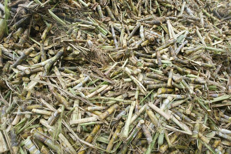 La Réunion: planteurs et industriels s'affrontent sur le prix de la canne