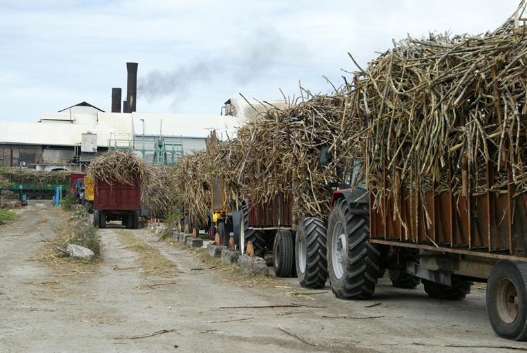La Réunion: Le prix de la tonne de cannes  enflamme le monde agricole