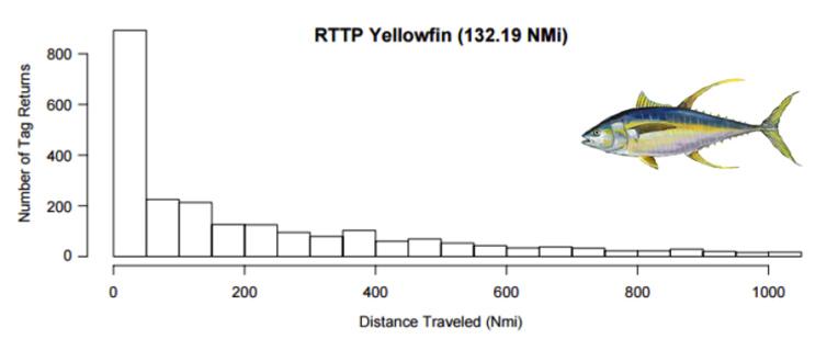 Déplacement médian de thons à nageoires jaunes tagués entre 1989 et1995 ; la grande majorité des individus ont été recapturés à une distance inférieure à 200 milles marins (Sibert et Hampton, 2002).