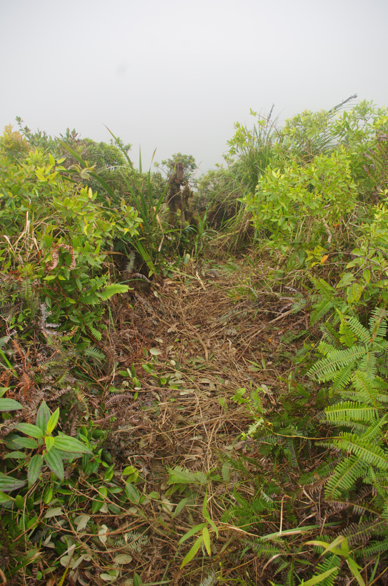 Raiatea : De nouveaux saccages autour du Tiare 'Apetahi