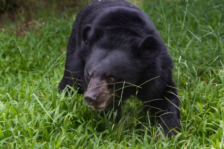 Suède: un ours tue un soigneur dans un parc animalier