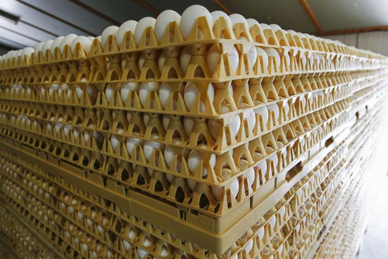 Des millions d'oeufs néerlandais contaminés retirés de la vente dans un scandale sanitaire