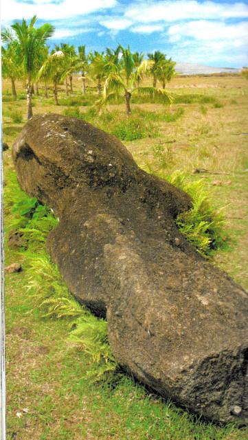 Les cocotiers de Tahiti peu connus du secteur de Vaitea ; malheureusement, ils sont bien malades…