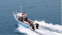 Australie: une baleine heurte un bateau et blesse des passagers