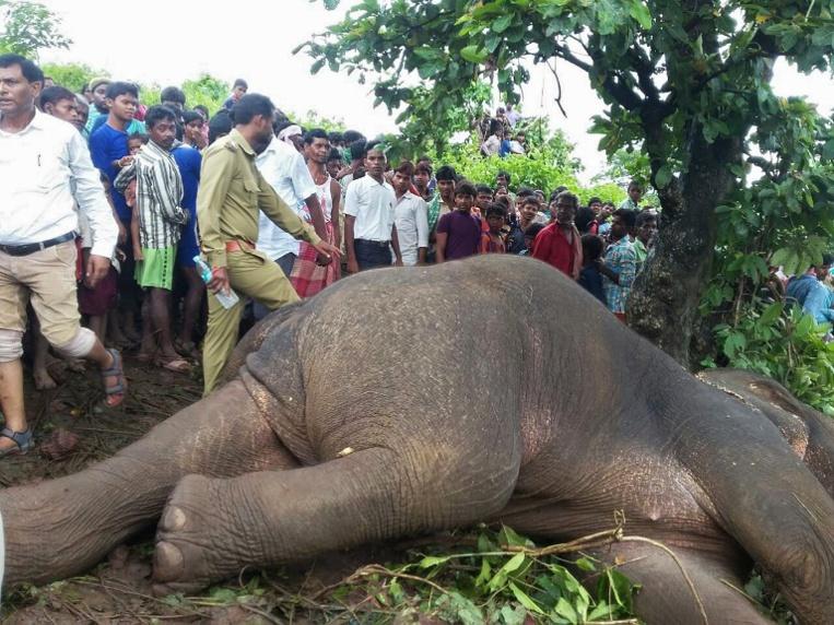 """Inde: un éléphant tueur abattu par """"l'un des meilleurs chasseurs"""" du pays"""