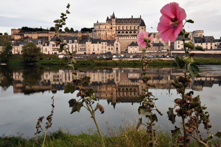 Cyanobactéries toxiques dans la Loire, en Maine-et-Loire