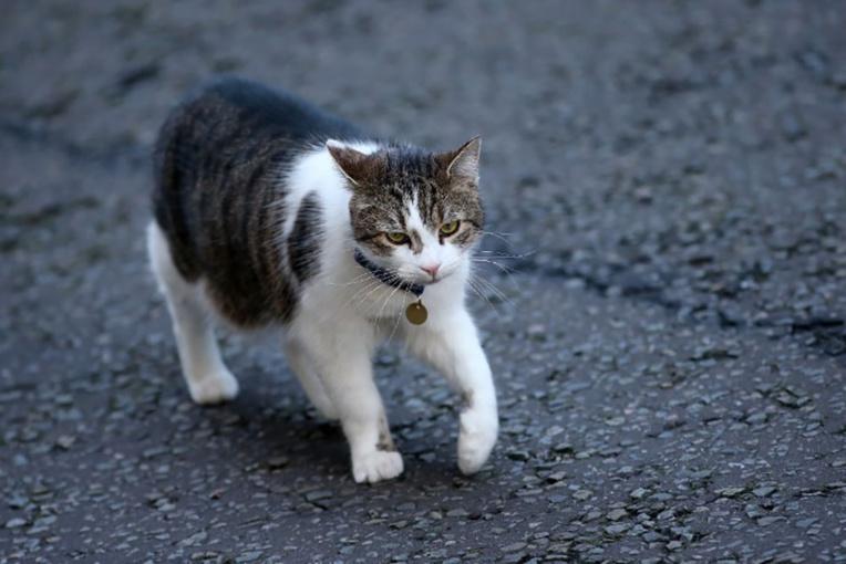 Var: six mois de prison ferme avec mandat de dépôt pour avoir tué un chat