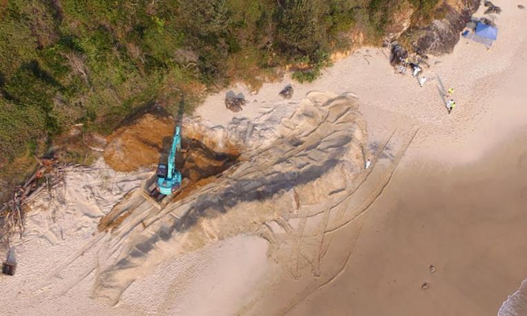 Exhumation et découpage d'une baleine de 18 tonnes sur une plage australienne