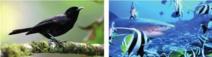 Nouveaux financements en faveur de la biodiversité Outre-mer