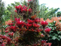 Un jour, une plante: Neoregelia, le Broméliacée aux feuillages colorés
