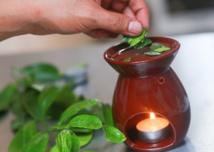 Un jour, une plante: le combava, shampoing des Tahitiennes