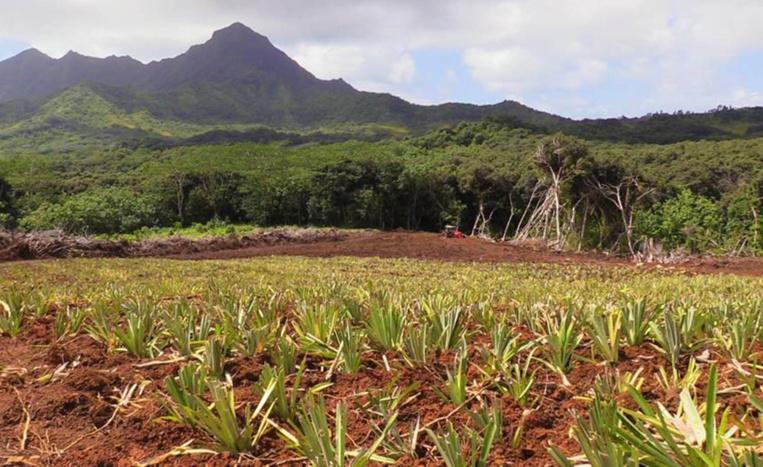 Raiatea : attribution des terres agricoles de Faaroa à Taputapuatea