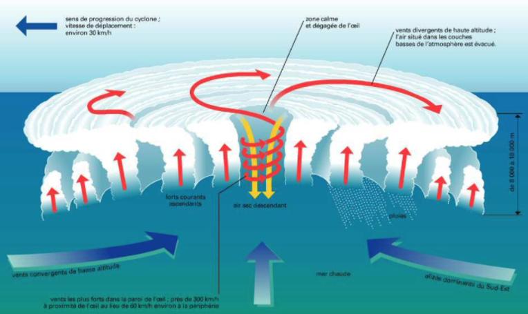 Il naît obligatoirement au-dessus de la mer, seulement lorsque la température de l'eau dépasse 26°centigrades sur une étendue de plusieurs millions de kilomètres carrés et sur une épaisseur de 50 à 100 mètres