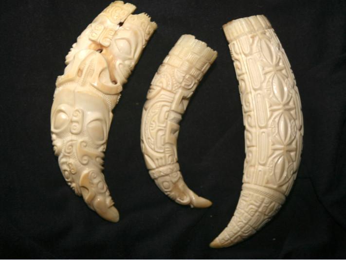 Les dents de cachalot étaient les objets les plus prisés aux Marquises où les baleiniers et santaliers les échangèrent pendant des années.