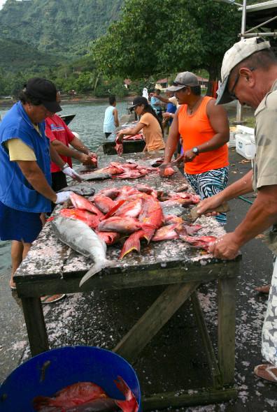 Sur le quai du petit port de Taiohae, poisson à gogo : longe de thon rouge ou poissons vidés et écaillés, tout est à 500 Fcfp le kilo !