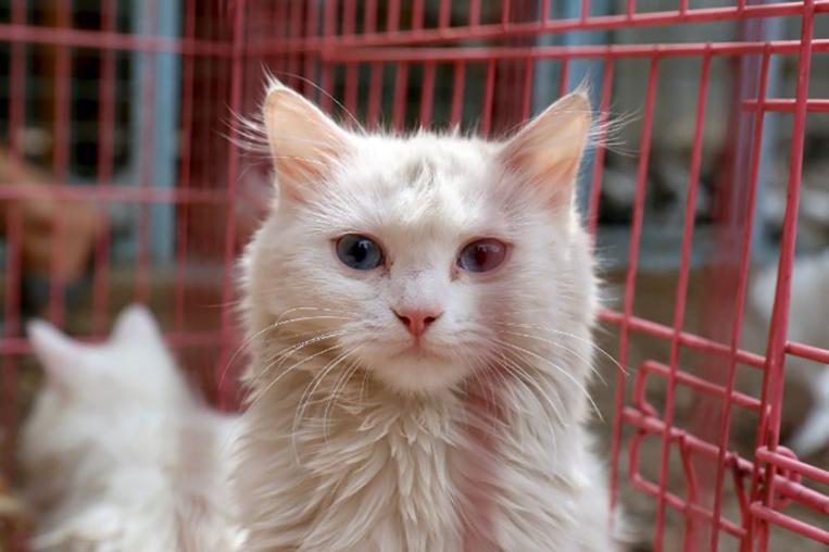 Japon: un chat errant peut-être à l'origine d'une tentative de meurtre