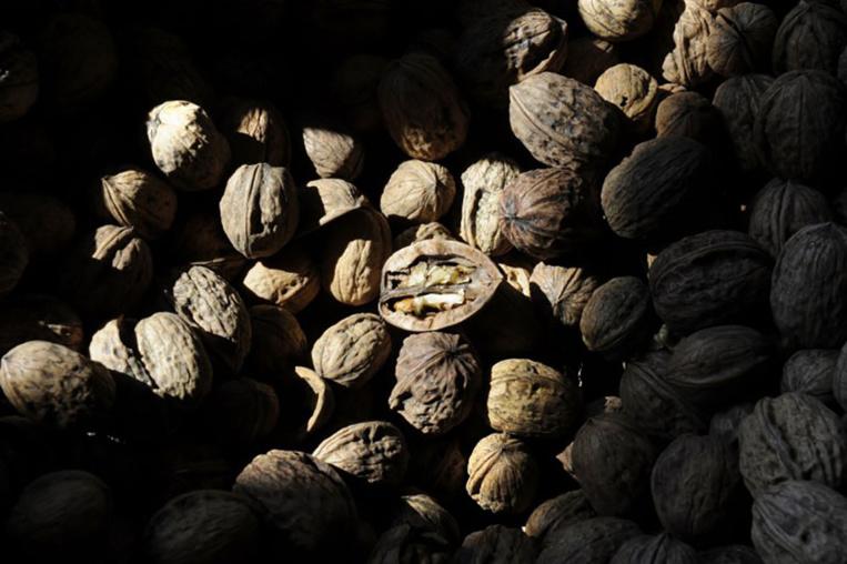 Consommer régulièrement des fruits à coque réduirait le risque cardiovasculaire