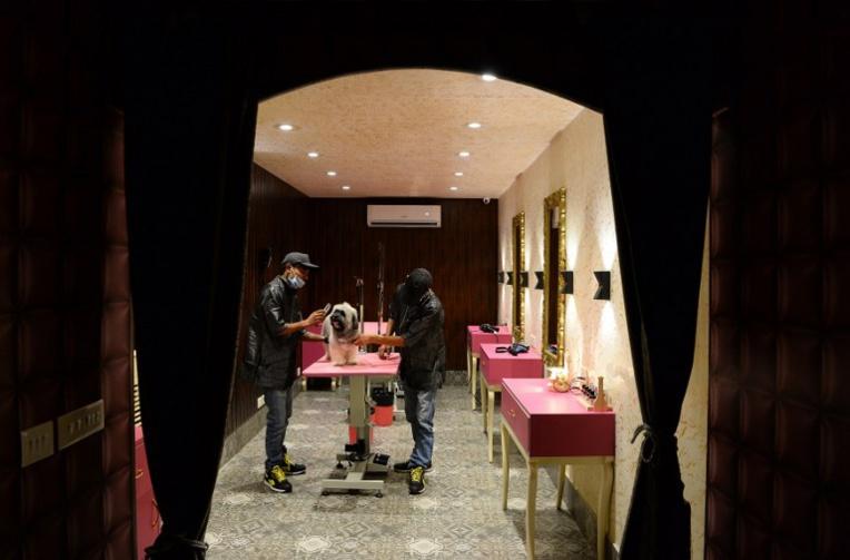 Wouf wouf! En Inde, un hôtel de luxe pour chiens pouponnés