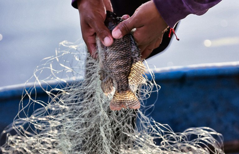 Les amours d'un poisson cassent les oreilles de ses voisins
