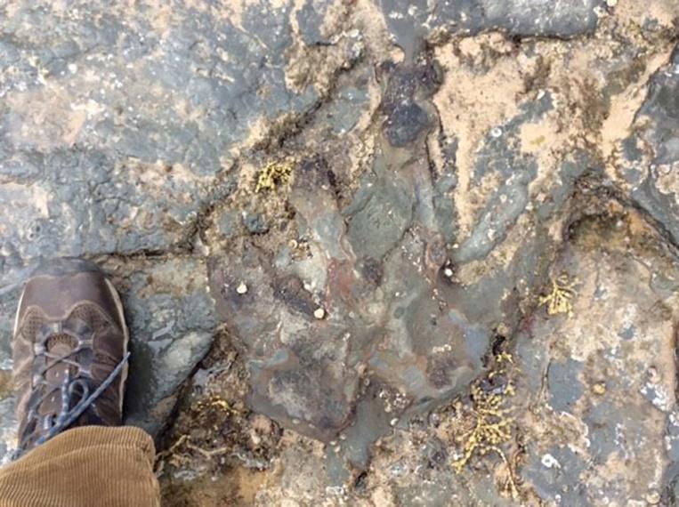Australie: une empreinte de dinosaure vandalisée au marteau