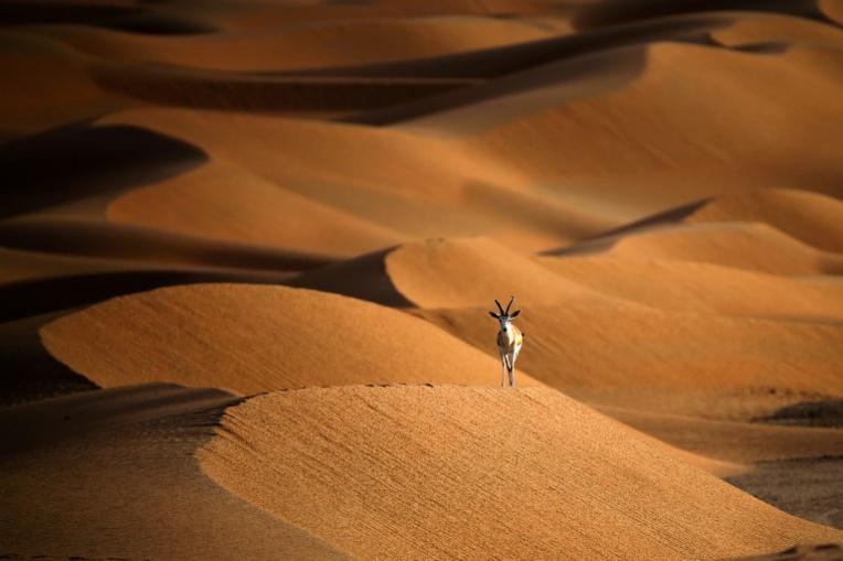 En quête de touristes, Oman ouvre au public une réserve d'oryx