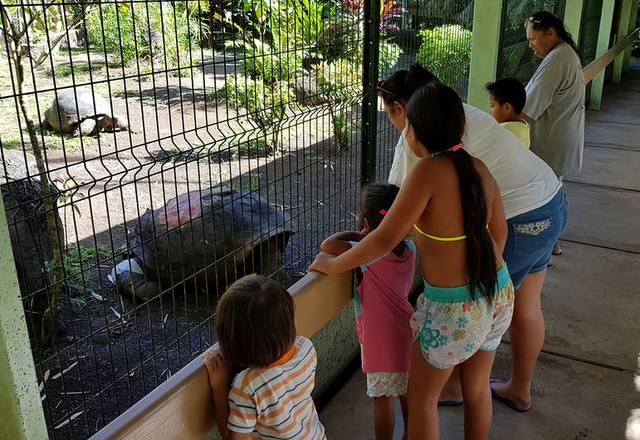Tortue du jardin botanique : une sécurité renforcée pour protéger Te ara u'i