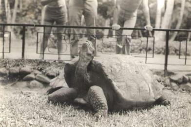Une des tortues au jardin botanique en 1970