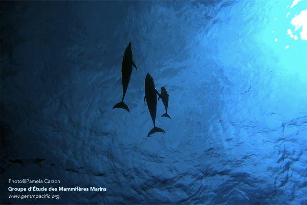 Aux frontières du sauvage, un documentaire sur les dauphins de Rangiroa