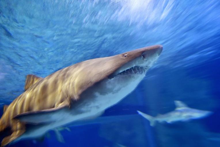Un Israélien survit au tir d'un harpon à requins dans le visage