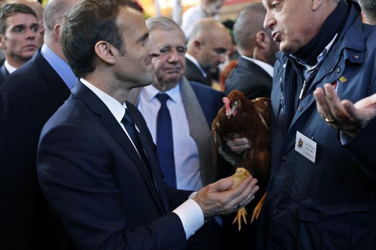 Au salon de l'agriculture, Emmanuel Macron a adopté une poule