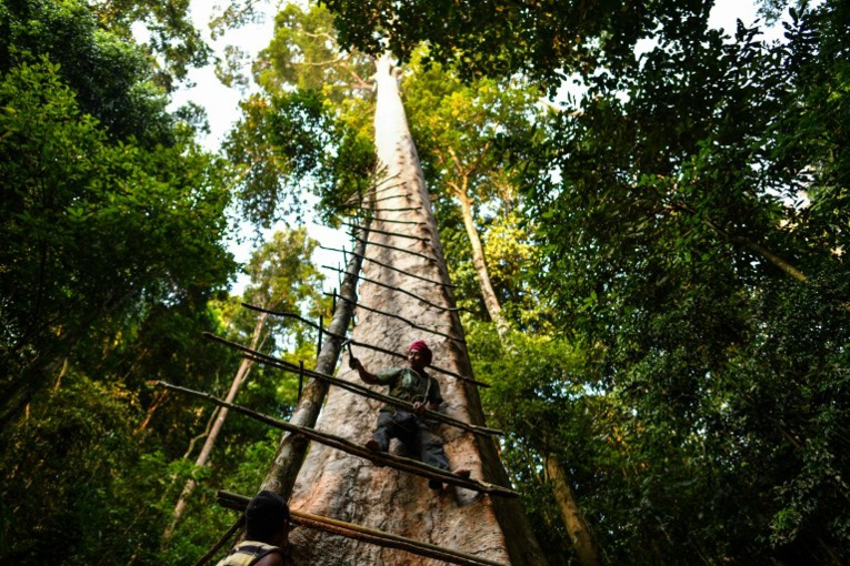 En Malaisie, les chasseurs de miel de l'extrême