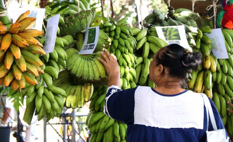 Cette année, la banane est venue rejoindre le 'uru pour ce festival.