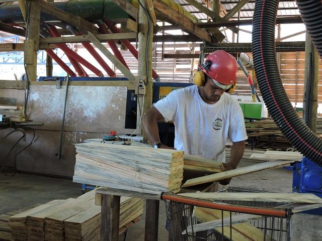 La filière bois prête à être développée