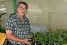 Expédition des plants dans les îles : plusieurs étapes à franchir en amont