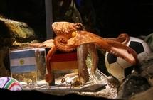 Mondial-2010 - Verdict de Paul le poulpe: l'Allemagne battra l'Argentine