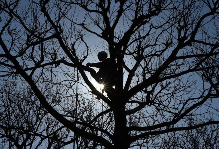 Un cambrioleur, ex-militaire britannique, se camoufle dans un bois pendant 5 mois