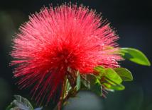Floralies: voyage au Pays des fleurs de Tahiti
