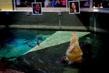 PHOTO : Harry le crocodile a choisi Julia Gillard (source : The Sydney Morning Herald) (146 Kb)