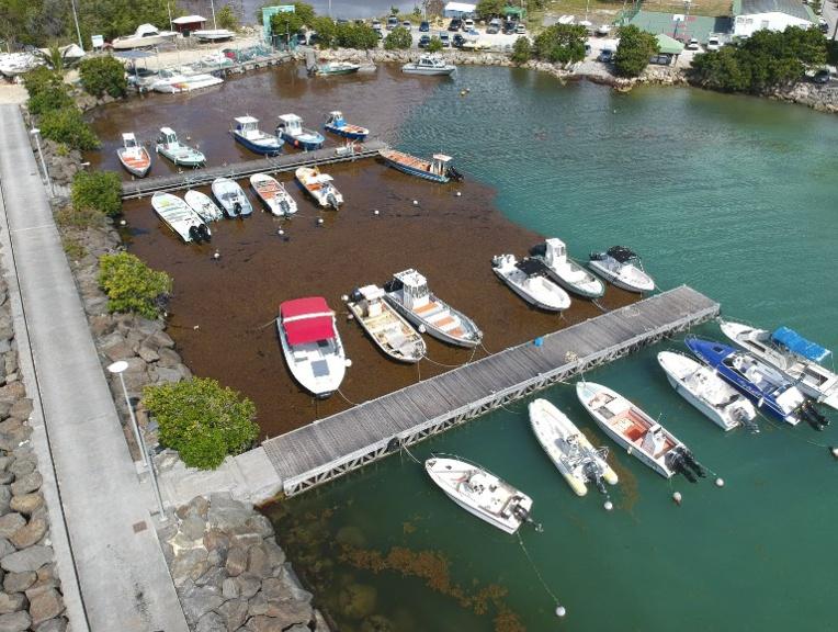 Rencontre internationale sur les sargasses début octobre en Martinique