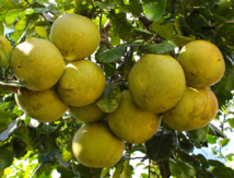 Carnet de voyage: Vaitumu Village, perle de Rurutu